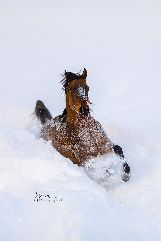 Pferd im tiefen Schnee