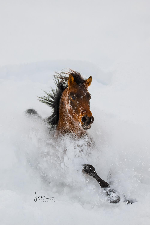 Junges Pferd tobt durch den tiefen Schnee