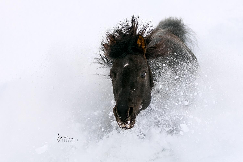 Rappe versinkt im Schnee