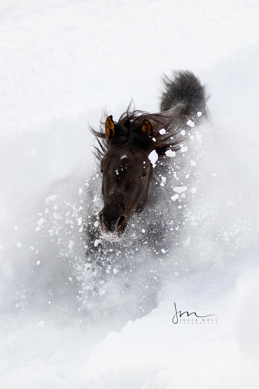 Schwarzes Pferd versinkt im tiefen Schnee