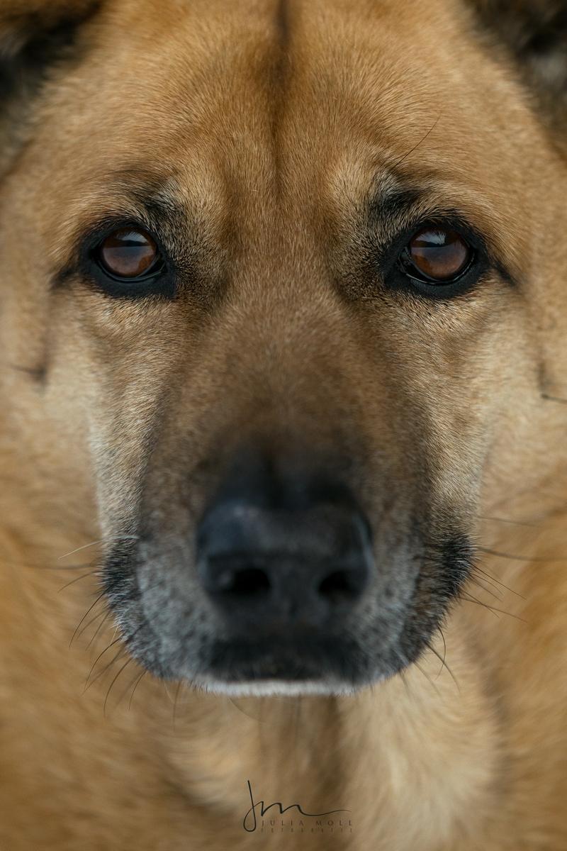 Bild von Mischlingshund