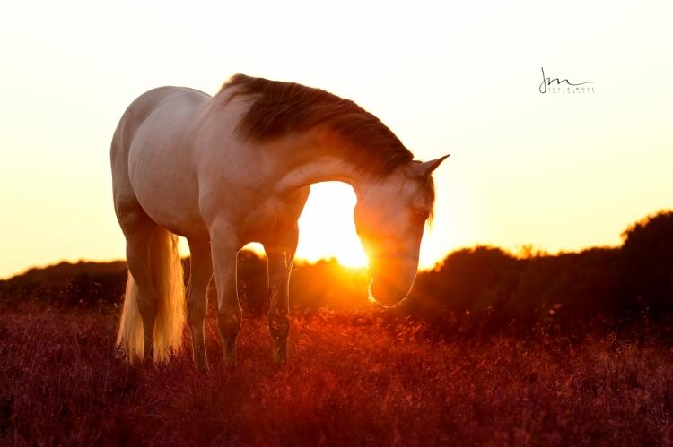 Spanisches Pferd 49A0787