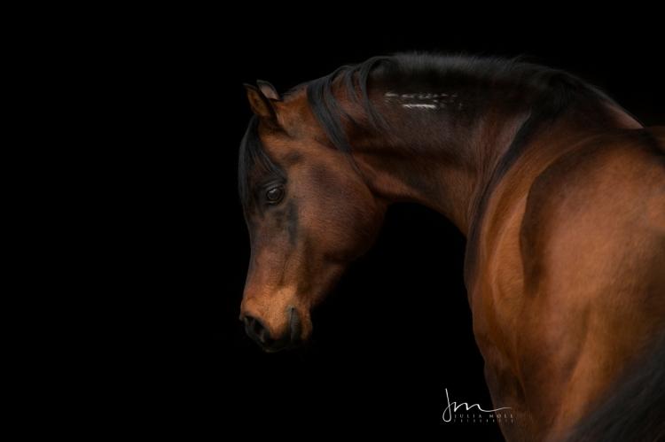 Porträt vor schwarzem Hintergrund 49A7011