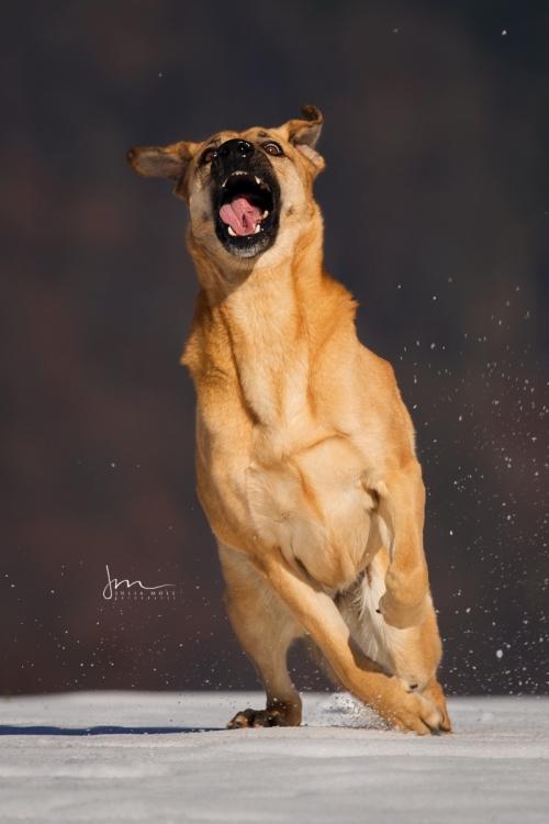 Hund beim Spielen fotografiert