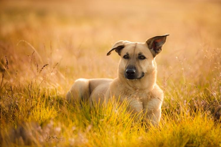 Hundefotografie in der Lüneburger Heide