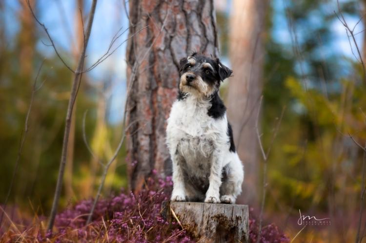 Terrier im Wald fotografiert