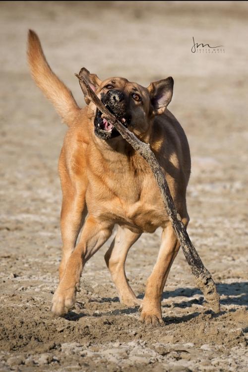 Hund mit Stöckchen beim Spielen