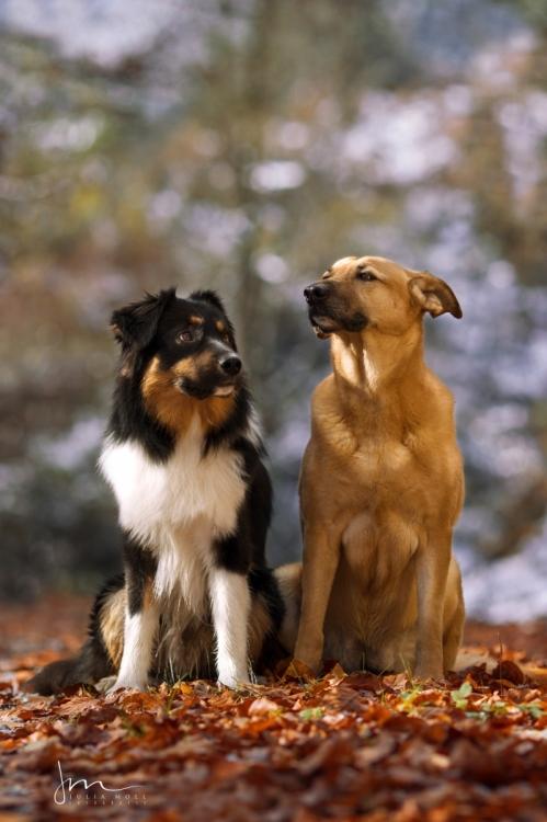 Hundefotografie mit zwei Hunden