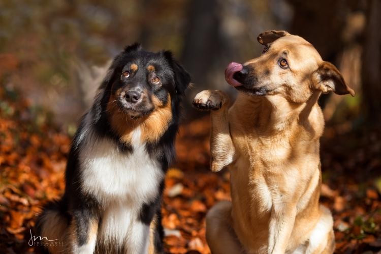 Zwei Hunde, die ziemlich beste Freunde sind