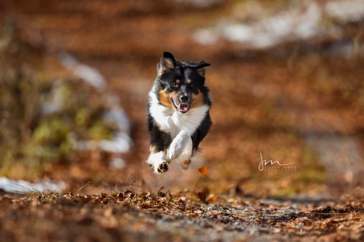 Hunde Action Fotografie