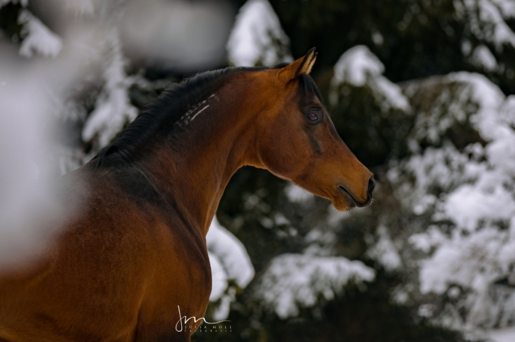 Araber im Winter _V0A5278