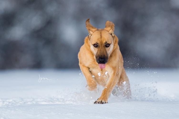 meine ziemlich beste Freundin Nala im Schnee