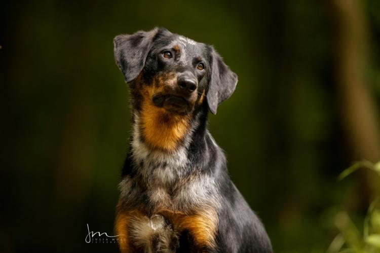 Hundefotografie im Wald