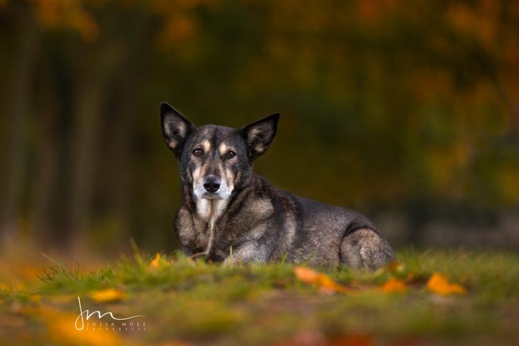 Porträt von Mischlingshündin auf dem Waldboden liegend Hundefotografie