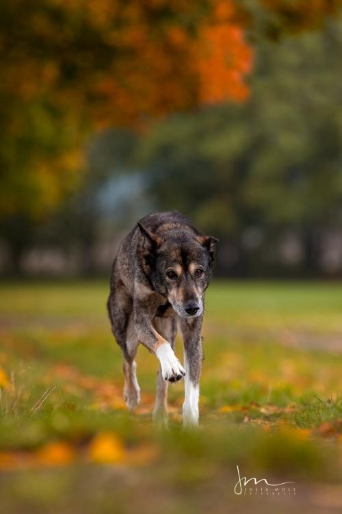 Hund in Bewegung fotografiert im Herbst