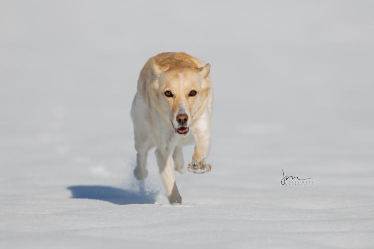 Hund rennt im Winter über den Schnee