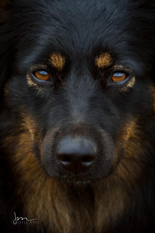 Hundefotografie einmal anders