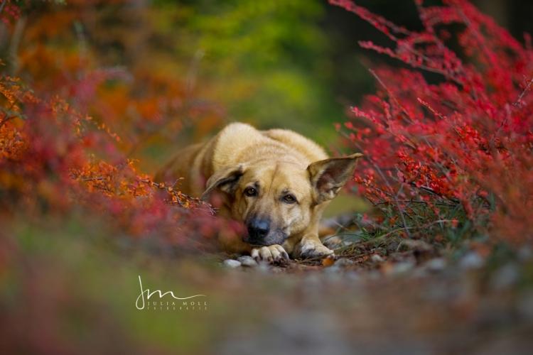 meine ziemlich beste Freundin Nala im Herbst