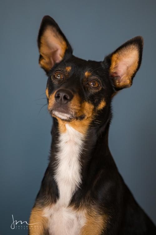 Hundefotografie im Studio